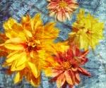 raffaellafornasier-fc005-blooming